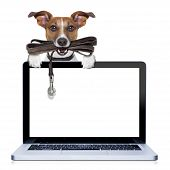 image of dog-walker  - jack russell terrier dog waiting to go for a walk with owner leather leash in mouth behind pc computer screen isolated on white background - JPG