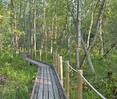 picture of wetland  - Mosquito nest - JPG
