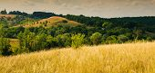 picture of steppes  - forest and steppe landscape blue sky with clouds panorama - JPG