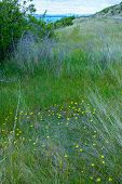 picture of thorns  - At bank of Lake Pukaki New Zealand beside a road small yellow dandelions blossom alongside with green grasses bushes and tough thorns - JPG