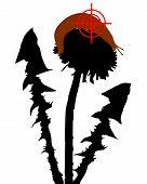 pic of slug  - Detailed and accurate illustration of aim at slugs on dandelion - JPG