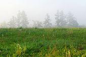 stock photo of wilder  - foggy late summer morning on the wilderness - JPG
