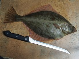 picture of flounder  - big fish flounder and cnife on stone - JPG