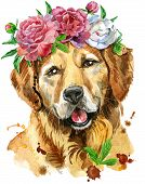 Cute Dog. Dog T-shirt Graphics. Watercolor Golden Retriever Illustration In A Wreath Of Peonies poster