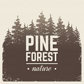 Sketch Vintage Nature Pine And Fir Tree Forest In Misty Fog Cartoon Scene Vector Retro Poster With S poster