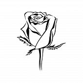 Vector Rose Bud Outline Silhouette. Logo, Tattoo Or Emblem Of Rose. Flower Element. Hand Drawn Illus poster