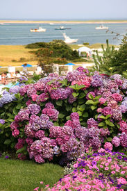 foto of cape-cod  - View of the ocean in Chatham on Cape Cod with hydrangea in ghe foreground - JPG