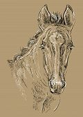 Cute Pony Foal Portrait. Young Pony Head In Black And White Colors Isolated On Beige Background. Vec poster