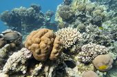 Colorful Coral Reef At The Bottom Of Tropical Sea, Great Favites Abdita Coral, Underwater Landscape poster