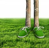 stock photo of carbon-footprint  - Green carbon footprint environmental concept shoes growing trees - JPG