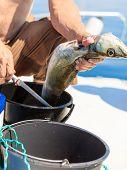 pic of animal cruelty  - Fishing  - JPG