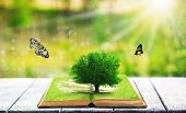 picture of fantasy  - Fantasy tale book on nature background - JPG
