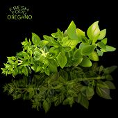 picture of oregano  - an illustration of a stem of an oregano herb on a black surface with a herb - JPG