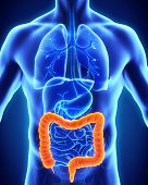 pic of human stomach  - Human Colon Anatomy Illustration  - JPG