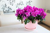 picture of azalea  - A Pink azalea and rose stand on the floor in room - JPG