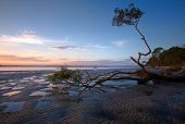 stock photo of wallow  - Distorted old mangrove broken and lying in puddles - JPG