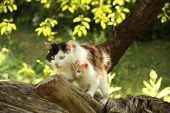 picture of babysitting  - Mother cat climbing cat with her cute kitten - JPG