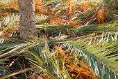 foto of tree trim  - Pruned palm tree frond around the tree trunk - JPG