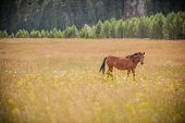 picture of steppes  - Wild horse in the steppes of eastern Europe - JPG