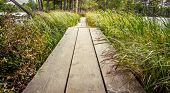 picture of wetland  - Boardwalk through wetlands leading into the forest - JPG