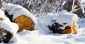 foto of firewood  - snowy forest in the sunshine and firewood - JPG