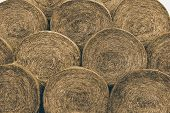 picture of fall-wheat  - Bale - JPG