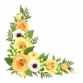 picture of orange blossom  - Vector corner background with orange and yellow roses - JPG