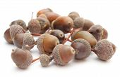 foto of acorn  - Stack of brown acorns isolated on white background - JPG