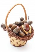 picture of acorn  - Stack of brown acorns and chestnut in wicker basket - JPG