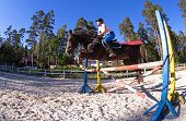 image of horse-riders  - Image of female rider with brown horse jumping a hurdle - JPG