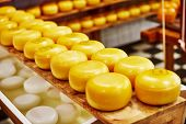 stock photo of meals wheels  - Cheese wheels on the shelves in diary production factory  - JPG