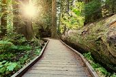 picture of redwood forest  - boardwalk in forest - JPG