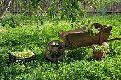 pic of wheelbarrow  - Wooden wheelbarrow under the apple tree with flowers - JPG
