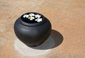 picture of frangipani  - White beautiful Frangipani flowers floating in water urn on stone backgrund in Sri Lanka Asia - JPG