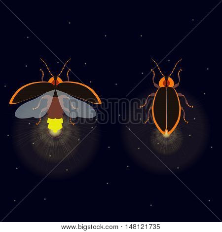 Firefly bug with