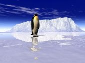 stock photo of h20  - this is landscape a penguin on it - JPG