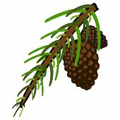 Pine Cone And Fir Tree. Coniferous Branch With Cones. Vector Illustration Of A Branch Of Spruce With poster