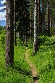 Summer Forest Landscape With Footpath, Sunny Day poster