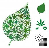 Plant Leaf Collage Of Hemp Leaves In Various Sizes And Color Tones. Vector Flat Ganja Leaves Are Org poster