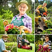pic of senior men  - Various gardening related images in a collage - JPG