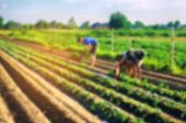 Workers Work On The Field, Harvesting, Manual Labor, Farming, Agriculture, Agro-industry In Third Wo poster