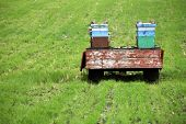 Hives on a meadow