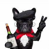 stock photo of french beret  - french bulldog with red wine peace or victory fingers and french beret - JPG