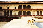foto of mughal  - Agra Red Fort - JPG