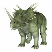 picture of backround  - 3D digital render of a dinosaur Styracosaurus or spiked lizard a genus of herbivorous ceratopsian dinosaur from the Cretaceous Period  - JPG