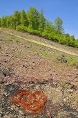 pic of deforestation  - a massive deforestation area in the carpathians - JPG