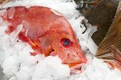 image of red snapper  - Red snapper on market display - JPG
