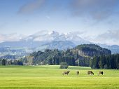 stock photo of bavaria  - Mountains in Bavaria with green meadow and cows - JPG