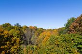 picture of ravines  - A view of a Toronto Ravine showing lots of trees in the fall - JPG