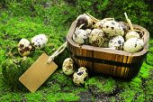 foto of grass bird  - Bird eggs in wooden bucket on green grass background - JPG
